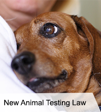 VegNews.AnimalTestingLaw